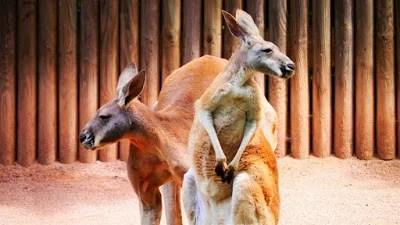 ऑस्ट्रेलिया के बारे में 38 रोचक तथ्य - Interesting Facts about Australia in Hindi