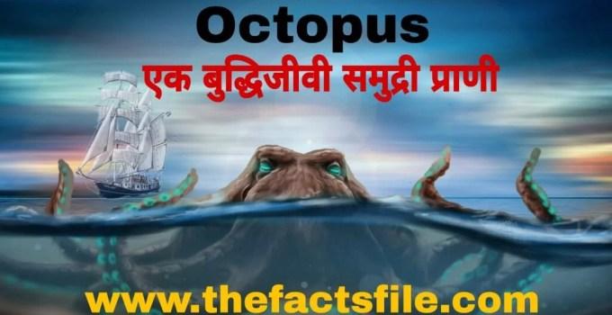 InterestingFacts about Octopus in Hindi - ऑक्टोपस(अष्टबाहू) के बारे में जानकारी और रोचक तथ्य