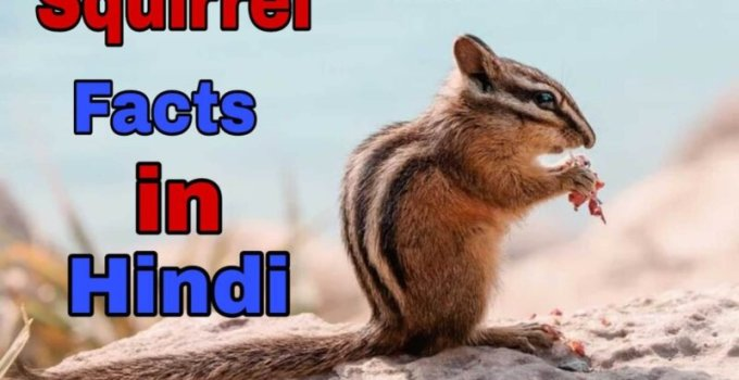 Amazing Squirrel facts in Hindi - गिलहरी के बारे में 21 रोचक तथ्य