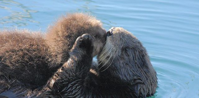 Otters are raised by their mothers.
