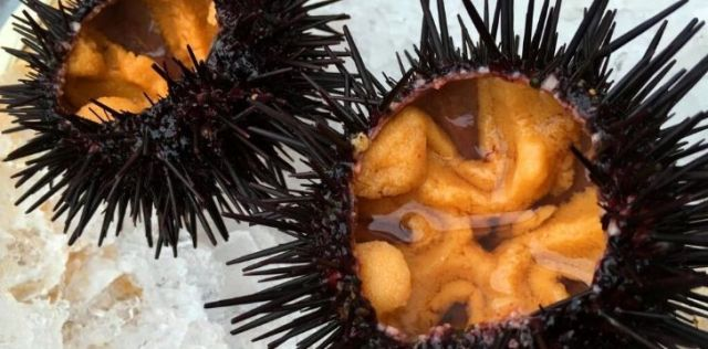 Urchin that have been prepared for people to eat