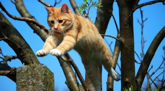 A cat falling from a tree - but in full control