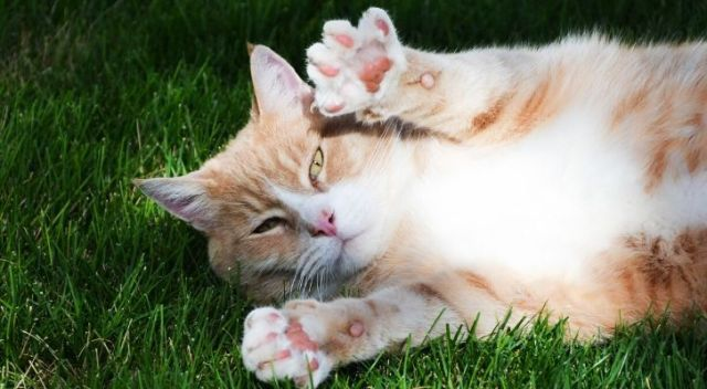 A cat laid in the grass showing both of its front paws