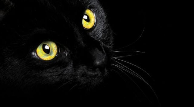A black cat on a dark background with it's green-yellow eyes wide open