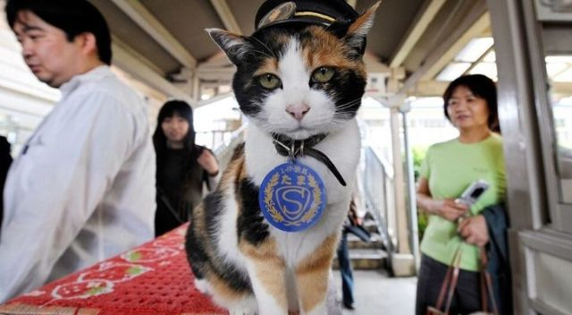 Tama the cat wearing at hat at Kishi Station