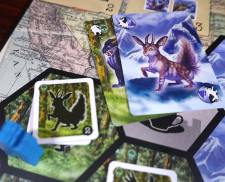 Quality-2 photo and 2 Tip cards: Rabbit/mountain, Bull-cat/forest