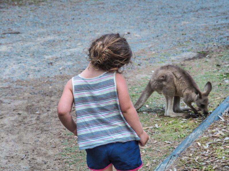 where to see wild kangaroos
