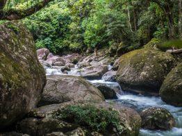mossman gorge queensland-7