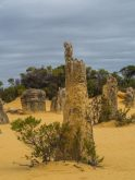 pinnacles perth tour