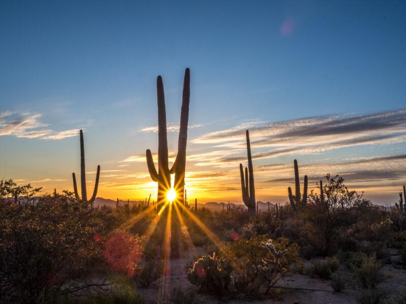Sunset through two saguaro cacti | sunset at Saguaro National Park | Southwest sunset
