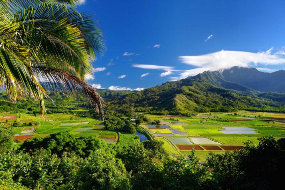 Taro fields in beautiful Hanalei Valley on Kauai island, Hawaii