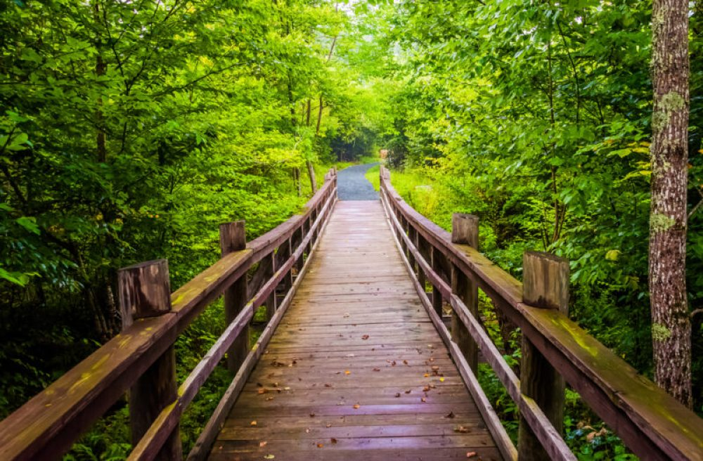 Walking bridge on the Limberlost Trail in Shenandoah National Park, Virginia.