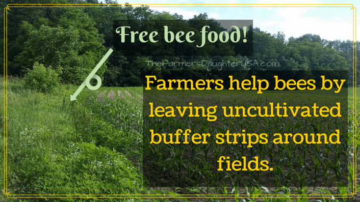 Farmers help protect bees by leaving
