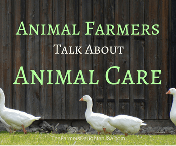 Animal Farmers Talk About Animal Care