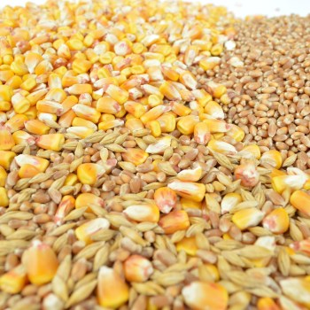 Montana Introduces Bill to Promote Uniform Seed Regulation