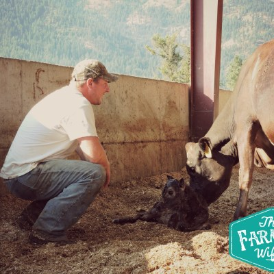 A Veterinarian's Role on Our Farm
