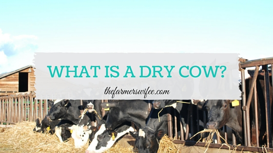 What is a Dry Cow?