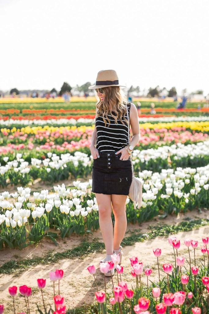 Texas-Tulips-4134