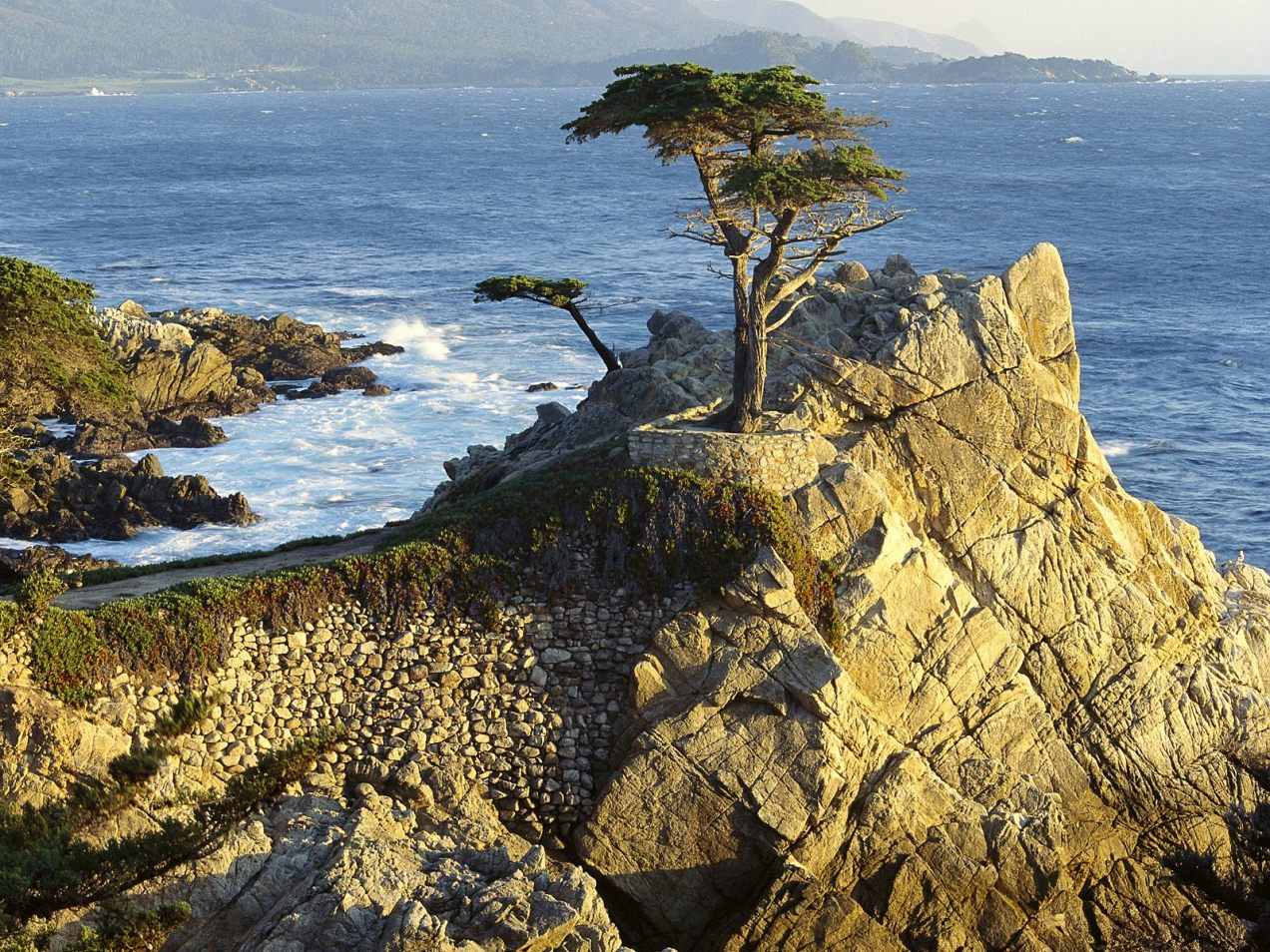 World_USA_Lono_Cypress___Pebble_Beach___California___USA_008934_