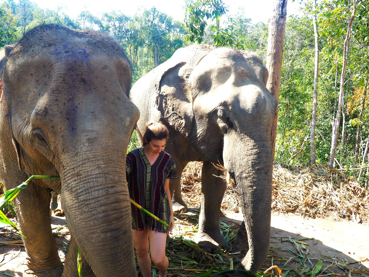 Elephant Jungle Sanctuary - The Ethical Choice