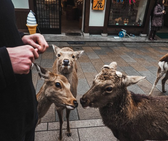 one day in Nara