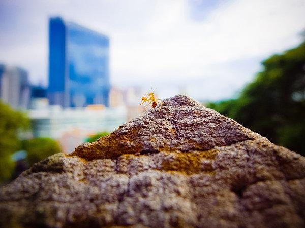 Image: FreeImages.com/danist soh