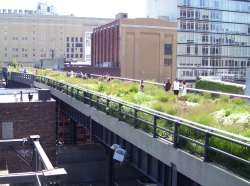 The plantings of New York's High Line Park were inspired by plants that had naturally colonised the disused railway viaduct.