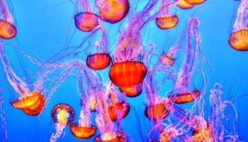 environment jellyfish