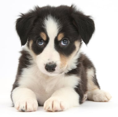 How to Save Money on Dog Ownership - cute puppy image