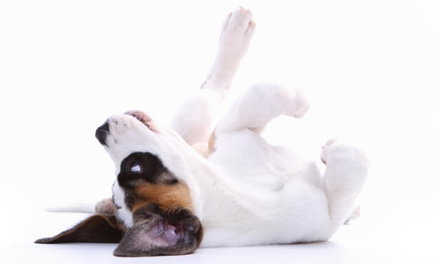 How to Save Money on Dog Ownership - cute dog rolling over image