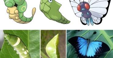 manger des insectes