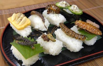 sushi mangers des insectes