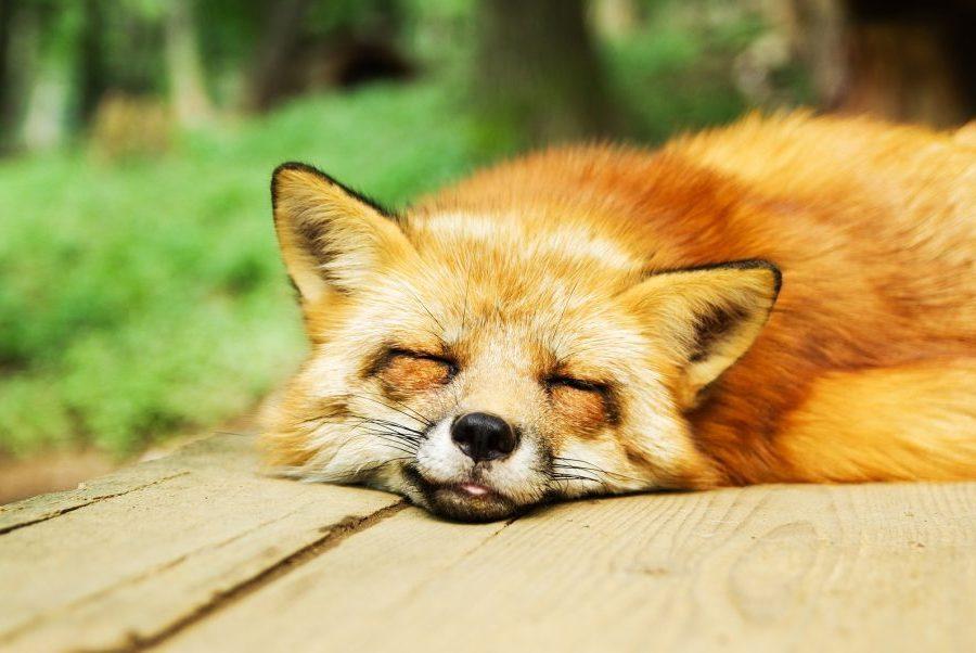 dormir important maigrir régime prendre du muscle