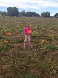 pumpkin patch, picking pumpkins, pumpkin