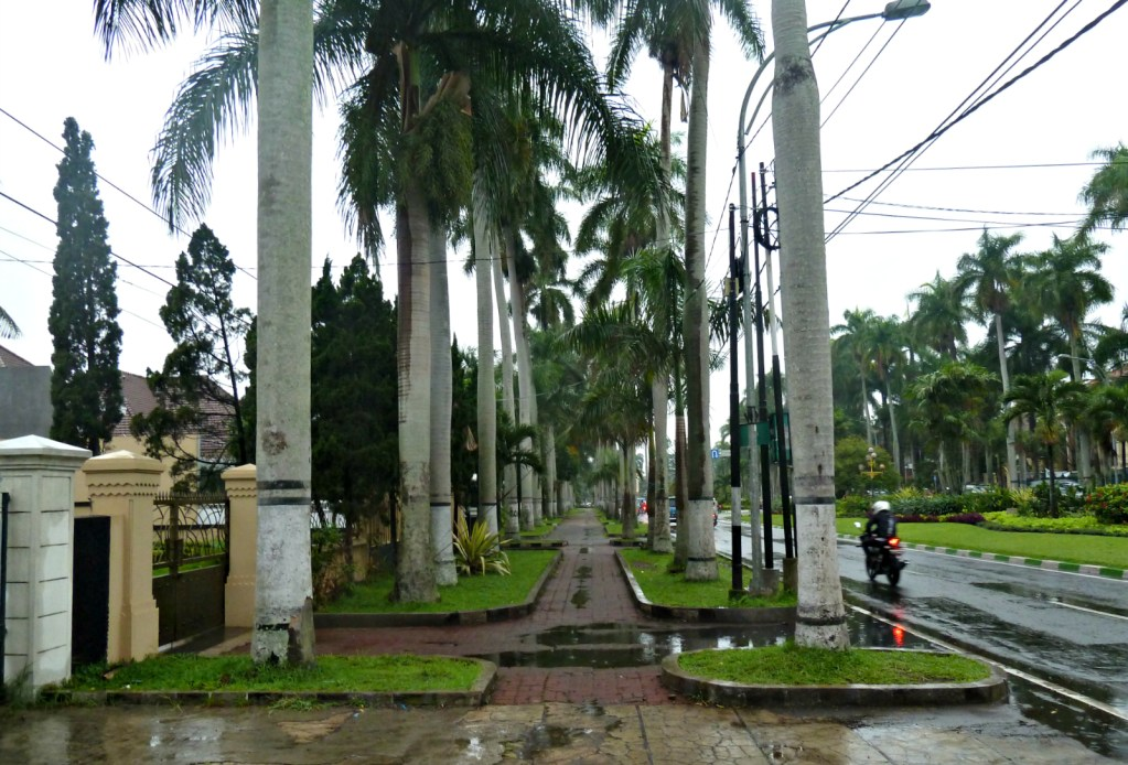 Bali seemed to shun pavements; in Malang, they're lined with palm trees