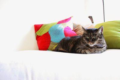 Le chat est perturbé pendant le déménagement, mais se remet vite de ses émotions