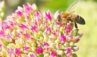 Honey Nut Cheerios Giveaway #BringBackTheBees