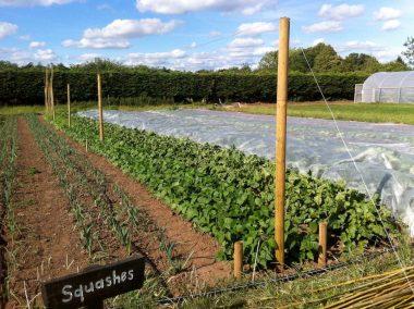 Fold Farm for website-11
