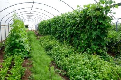 Fold Farm for website-22