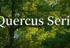 Quercus Serif Super Famıly [16 Fonts] | The Fonts Master