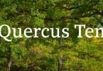 Quercus 10 Super Family [14 Fonts] | The Fonts Master