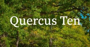 Quercus 10 Super Family [14 Fonts]   The Fonts Master
