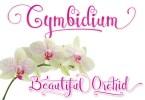 Cymbidium Script [1 Font] | The Fonts Master