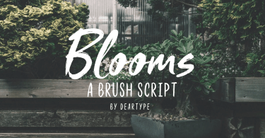 Blooms [4 Fonts]   The Fonts Master
