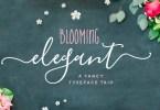 Blooming Elegant [8 Fonts] | The Fonts Master