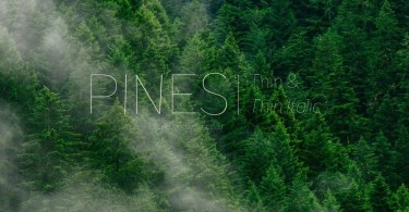 Pines Thin &Amp; Pines Thin Italic [2 Fonts] | The Fonts Master