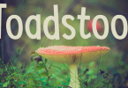 Toadstool [2 Fonts] | The Fonts Master