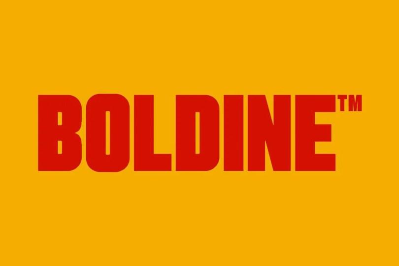 Boldine [3 Fonts] | The Fonts Master