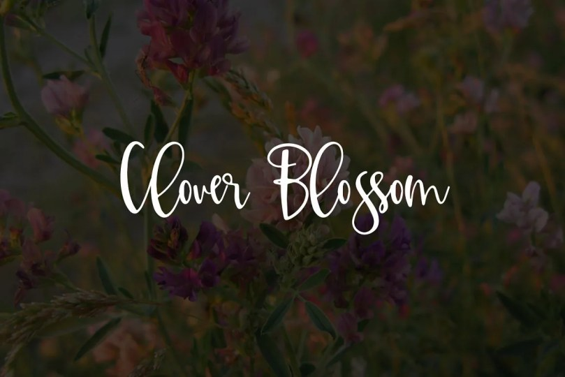 Clover Blossom [1 Font] | The Fonts Master