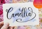 Camellia [1 Font] | The Fonts Master